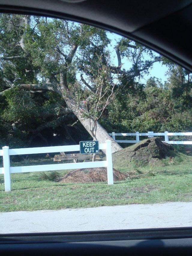 Tree down at HTP