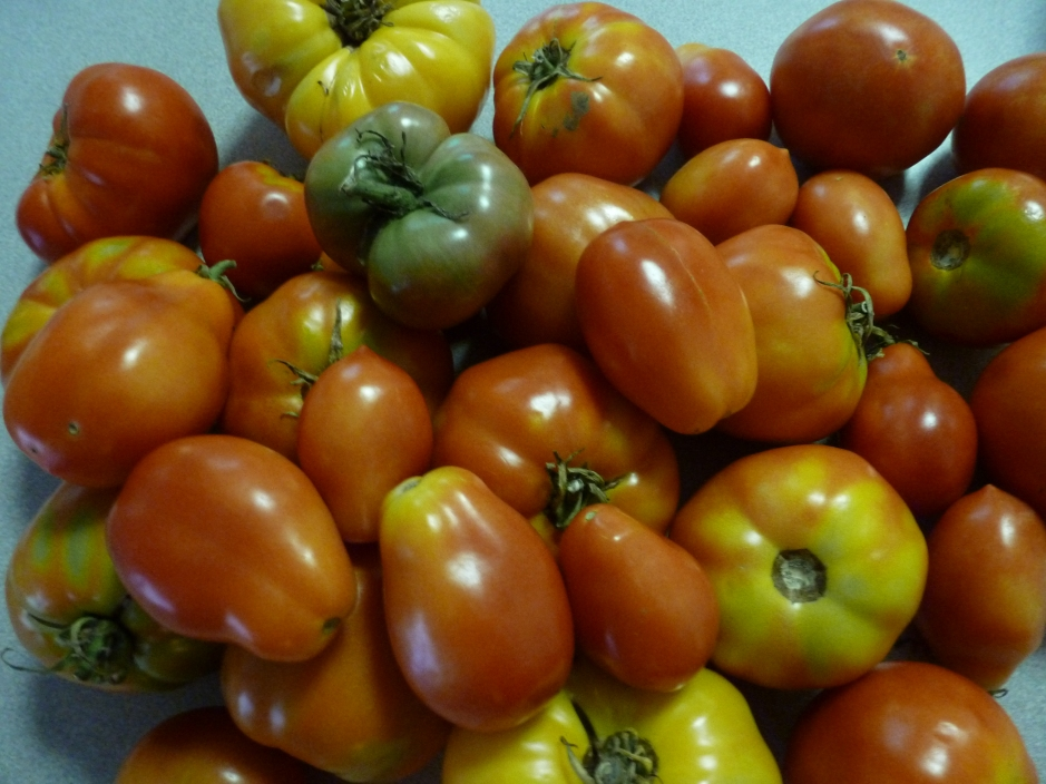 home grown jersey tomatoes