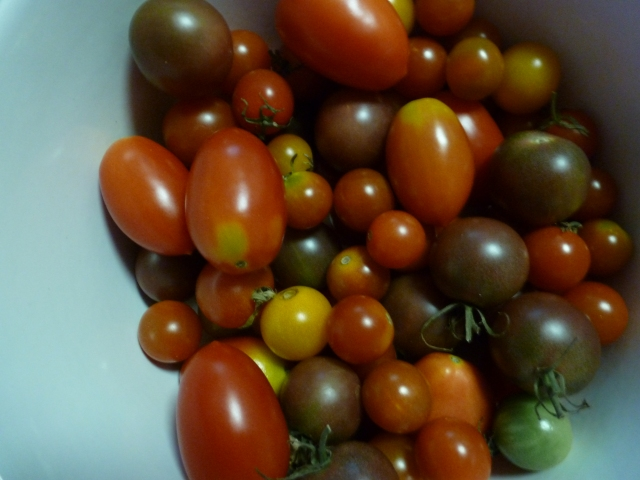 heirloom jersey tomatoes
