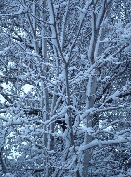 Snow in Emerald Isle, NC